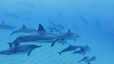 【ドルフィン】ドルフィン&ユーで野生のイルカと泳ごう(昼食付き)