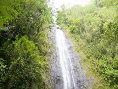 【アクティビティー】マノア滝ハイキングツアー