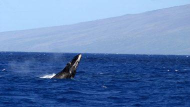 【ハワイを楽しむ50の方法】Vol.5 クジラに出合う感動体験