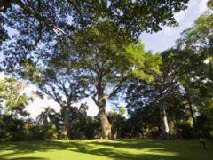 フォスター植物園/Foster Botanical Garden