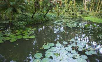 ハワイ・トロピカル・ボタニカル・ガーデン/Hawaii Tropical Botanical Garden