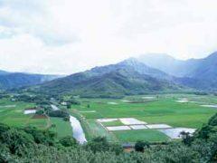 ハナレイ渓谷展望台/Hanalei Valley Lookout