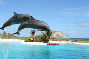 アラモレンタカー + シーライフ・パーク・ハワイが「レンタカーでイルカに会いに行こう!」キャンペーン実施