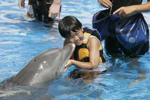 シーライフ・パーク・ハワイがイルカのぬいぐるみプレゼントキャンペーンを開始