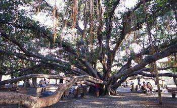 バニヤン・ツリー/THE BANYAN TREE