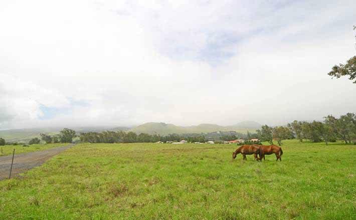 パーカー牧場/Parker Ranch