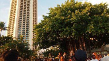 無料なのに本格的!クヒオビーチ・フラショー/Kuhio Beach Hula Show