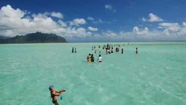【人気ツアー】キャプテンブルース 天国の海®でハワイの大自然を満喫