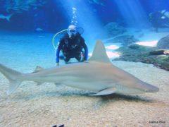 サメと泳げる「シャーク・ダイブ・マウイ」