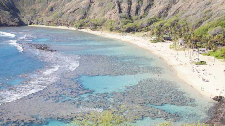 珍しい魚に出合える!ハナウマ湾シュノーケリング