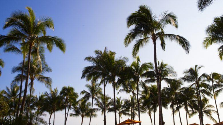 チェイス・ハワイ・レンタル / CHASE HAWAII RENTALS