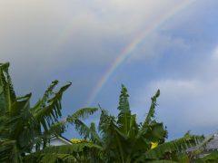 【コラム】ハワイ文化の基礎知識/「ALOHA」その2