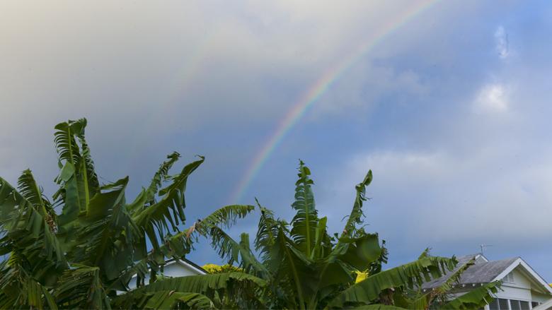 【コラム】ハワイ文化の基礎知識/ハワイのことわざ