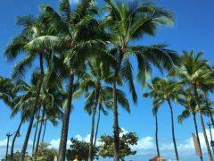 メイソンジャーブームを巻き起こしたマウイ島発「ワウワウ・ハワイアン・レモネード」