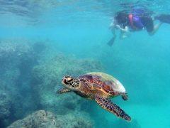 「海」派に おすすめ!ハワイの人気マリン系オプショナルツアー4選