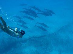 澄んだ海で魚たちと遊びたい 絶好のスノーケリングエリアをCheck!
