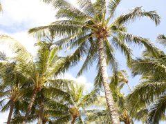 海岸沿いの景色が最高!レンタカーでめぐる、オアフ島南東部〜カイルアタウン