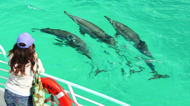 イルカに会える!泳げる!人気ドルフィンプログラム