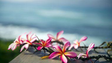 フレッシュレイはハワイ流の「おもてなし」