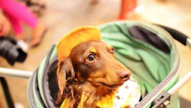 愛犬と一緒にハワイに行きたい!