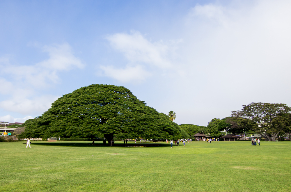 モアナルア・ガーデン・パーク/Moanalua Garden Park