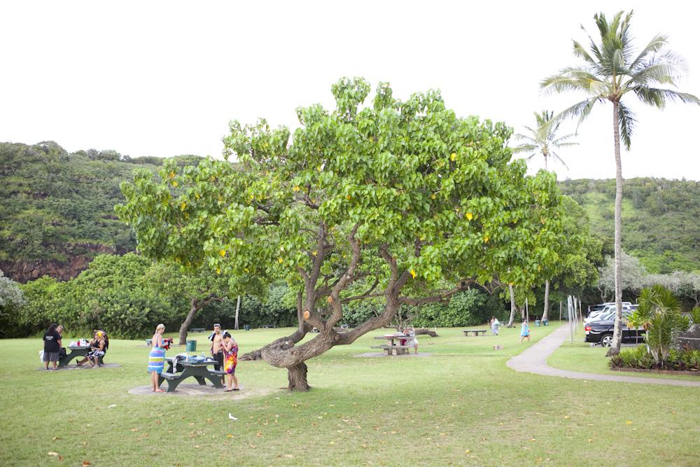 ワイメア・ベイ/Waimea Bay Beach Park