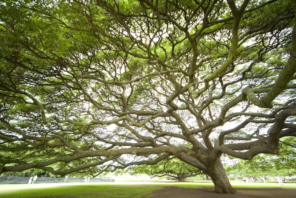 チャイニーズ・ホール(モアナルア・ガーデン)/Chinese hall(Moanalua Gardens)