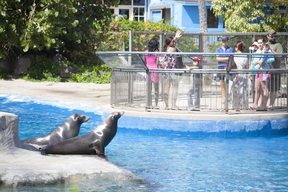 シーライフパーク・ハワイ/Sea Life Park Hawaii