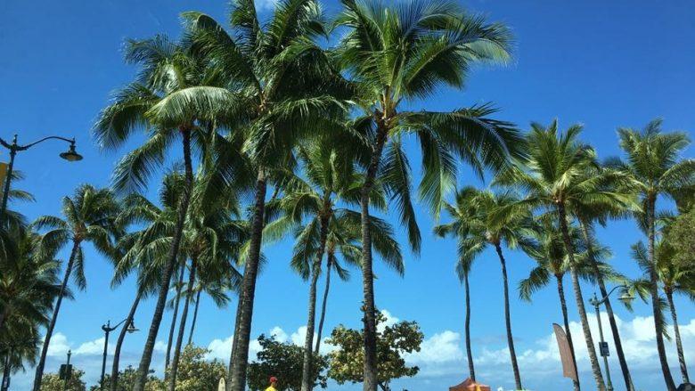 グローバル・ビレッジ・ハワイ・イングリッシュ・スクール / Global Village Hawaii-English School