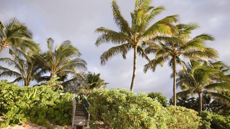 迷ったらここ!ハワイらしさを存分に感じられる有名スポット5選