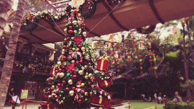 クリスマスシーズン限定!ワイキキでデコレーション散策はいかが?