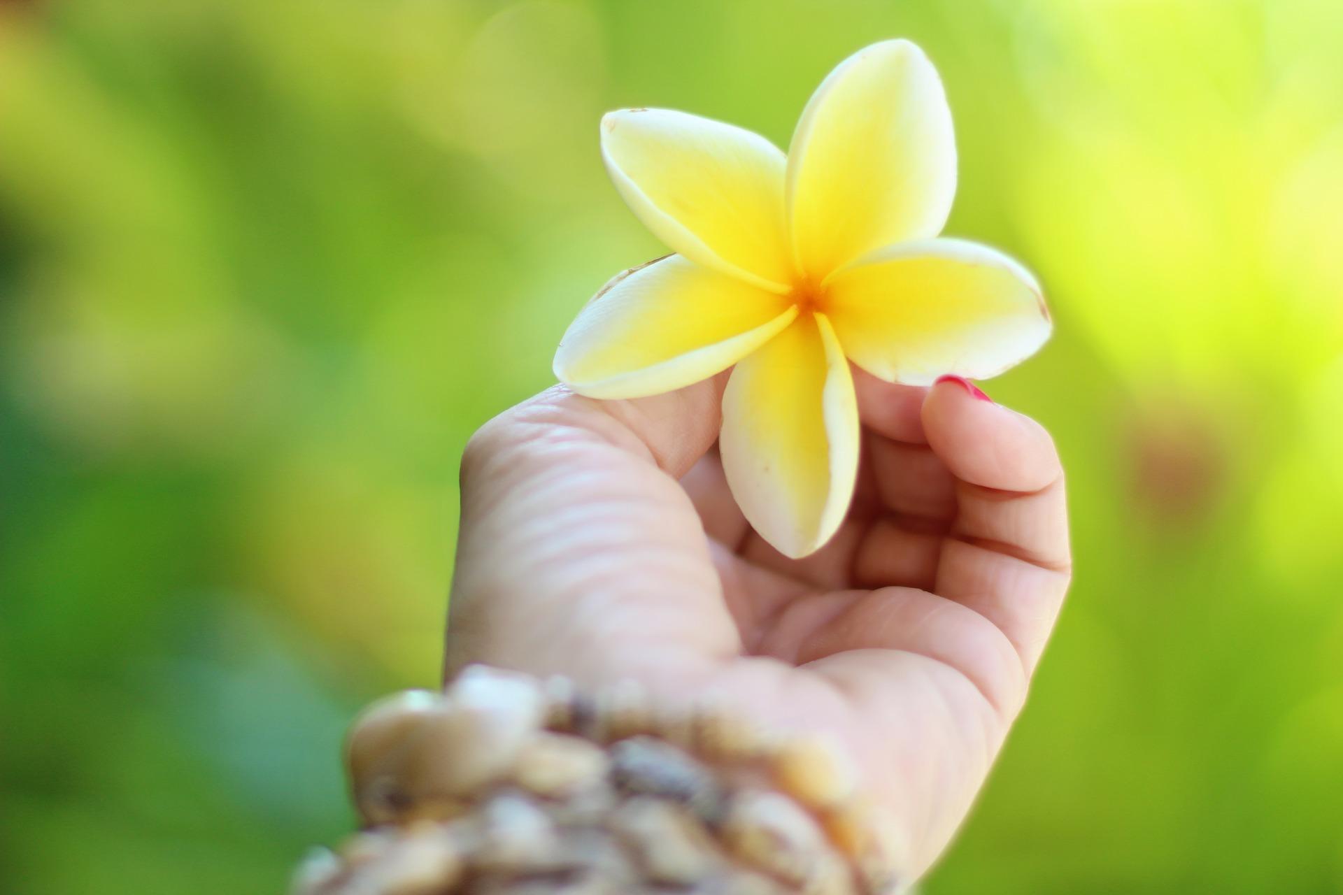 hawaii-2042053_1920