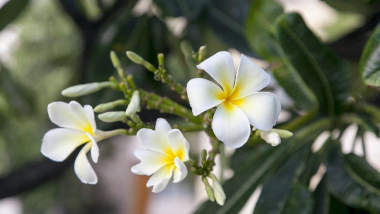ストーリーを語りたくなる逸品「ハワイの伝統工芸」を身に付けよう