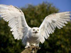 ハリーポッターに出てきたフクロウも。ハワイアンの守護神アウマクア