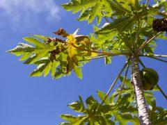 マウイ島でハワイ離島の魅力を満喫!おすすめ観光スポット6選