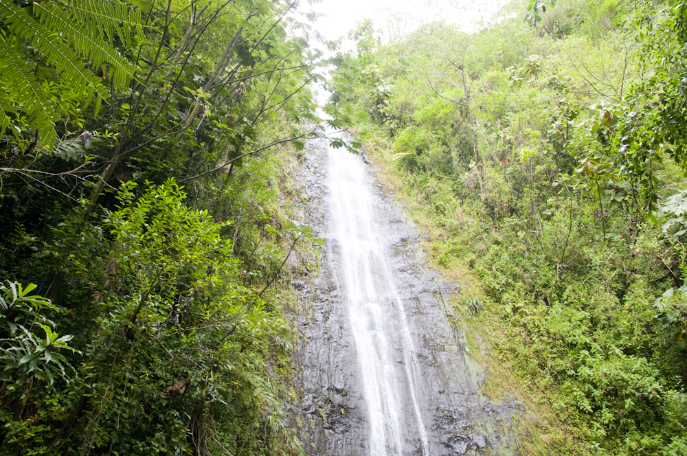 マノア・フォールズ・トレイル/Manoa Falls Trail