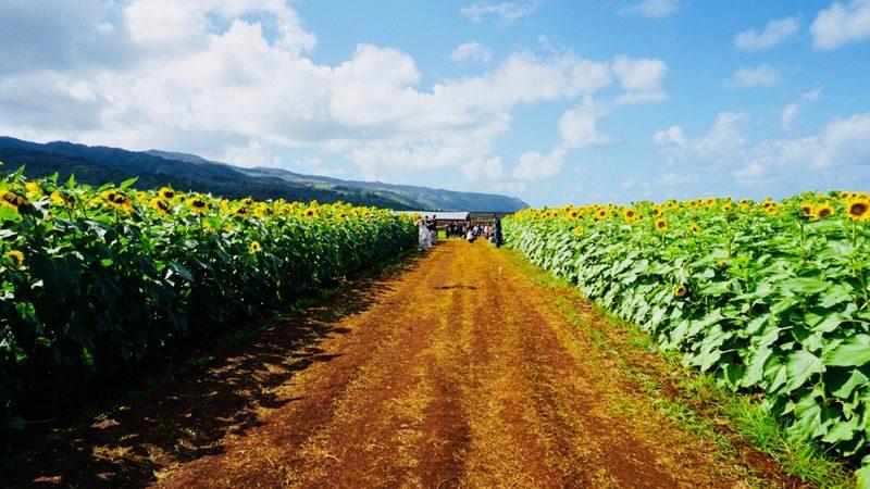 【ハワイ在住者おすすめ】まだまだ知られていないハワイのパワースポット3選