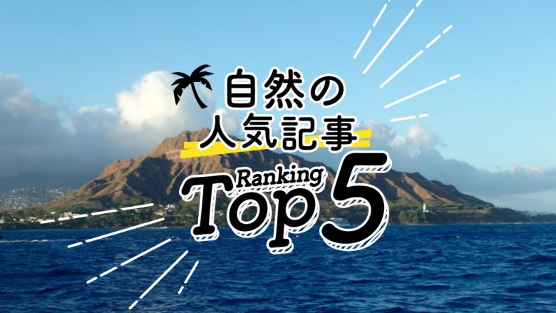 ハワイの「自然」人気ランキングTOP5