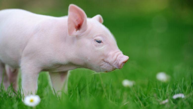 イケメンで女性好きな豚神?半神半人のカマプアア