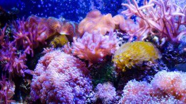 今年は「国際サンゴ礁年」ハワイのサンゴを守るために旅行者にできることは?