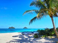 大好きなハワイのために♪ ハワイで始める「可愛い」エコライフ