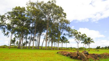 ハワイの歴史とグルメの街ワヒアワのおすすめスポット