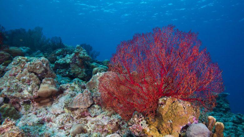 ハワイの思い出をいつも身に着けたい方へ。ハワイのサンゴからパワーをもらう。