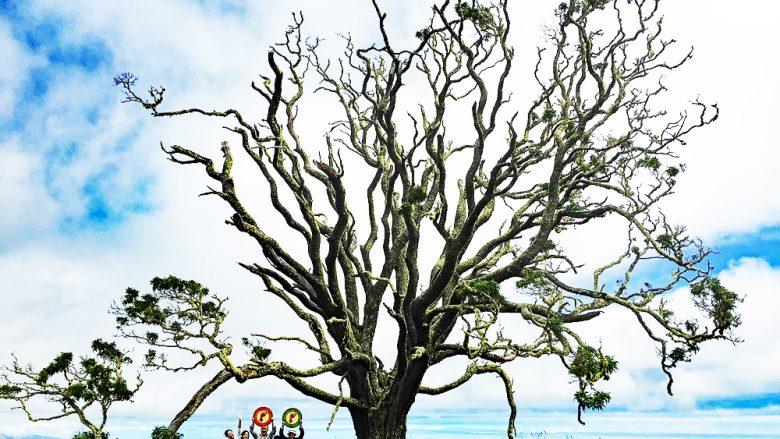 コアの木を植えて環境に貢献! ハワイ島のエコプログラム