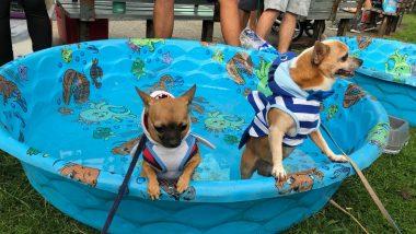動物好きは要チェック! ハワイのチャリティイベント、ペットウォーク