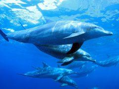 可愛いイルカとシュノーケリング!VELTRAのハワイイチ推しツアー♪