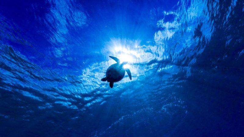 ハワイでウミガメやクジラに会える!とっておきの場所3選