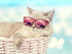 南の島ハワイに「ネコの楽園」と「ネコカフェ」があるワケ!