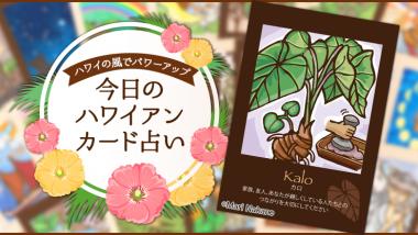 ハワイアンカード占い×LaniLaniコラボ座談会♪【カード紹介編】