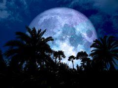 ハワイと月。1月21日は「スーパーブラッドウルフムーン」!